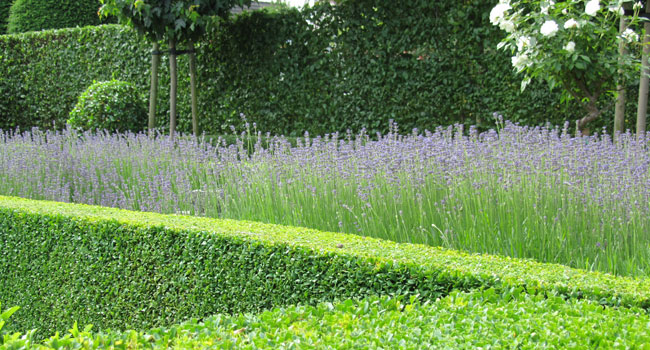 Privé tuin - Londerzeel